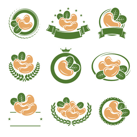 Cashew nuts labels and elements set. Vector illustration