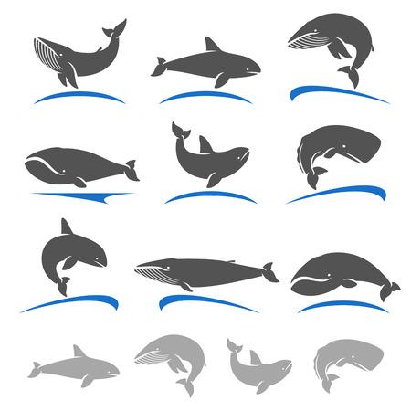 illustration collection: Whale set. Vector collection illustration Illustration