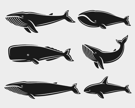 Whale set. Vector collection illustration Illustration