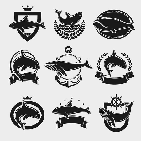 killer waves: Whale label and icons set. Vector illustration Illustration