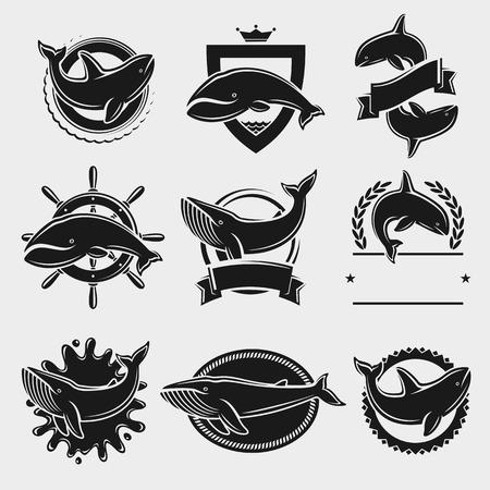 etiqueta de ballena y de conjunto de iconos. ilustración vectorial Ilustración de vector