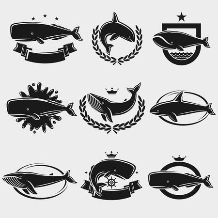 Conjunto de rótulo e ícones de baleia. Ilustração vetorial