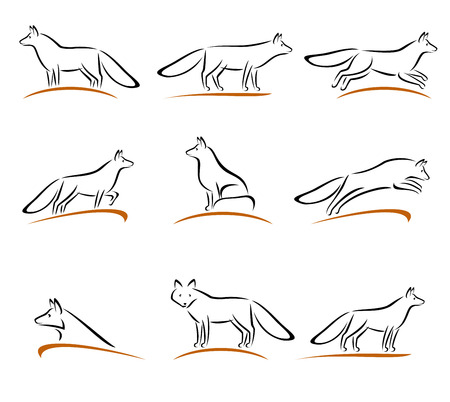 foxy: Fox set. Vector illustration tail background white red coyote style sign foxy wild