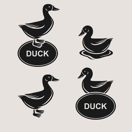 pato: conjunto de pato. Vector