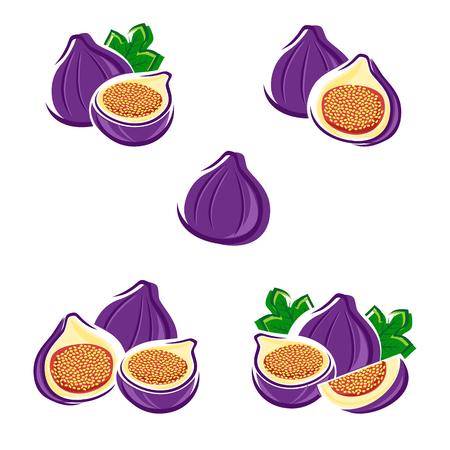 purple fig: Figs set. Illustration