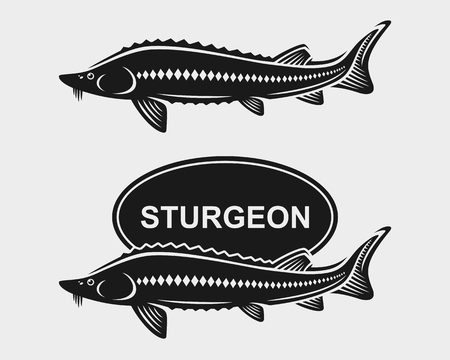 sturgeon: Sturgeon set. illustration fishing art symbol Illustration