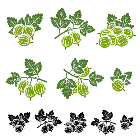 Gooseberry set. illustration background