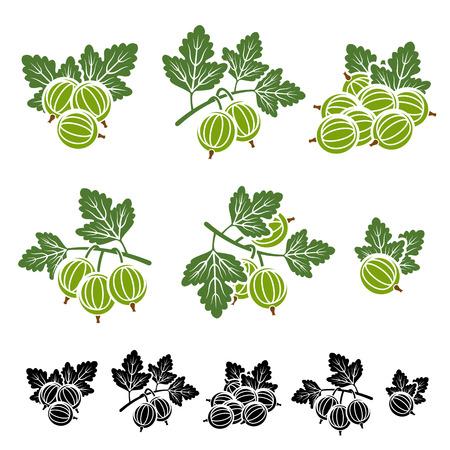 Gooseberry set. illustration background