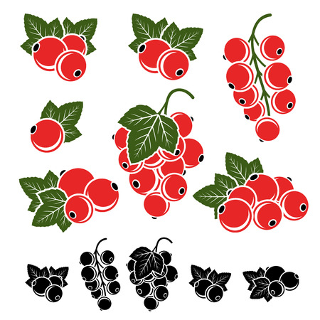 red currant: Red currant set. Vector illustration
