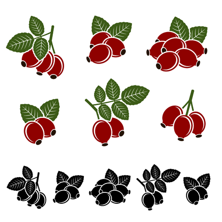 briar: Briar set. Vector illustration natural