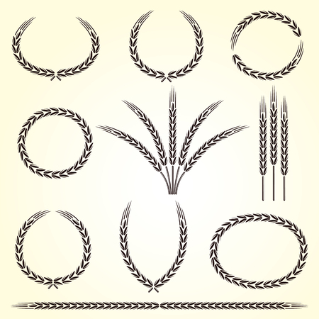 rye: Ears of wheat and rye set. Illustration