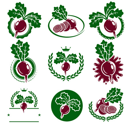 beet root: Beet labels and elements set. Vector