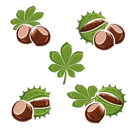 rind: Chestnut set. Vector Illustration