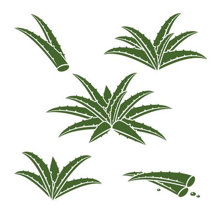 vera: Aloe Vera set. Vector