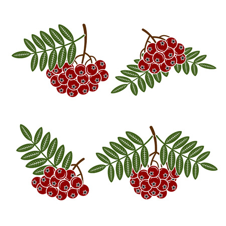eberesche: Beeren rowan gesetzt. Vektor Illustration