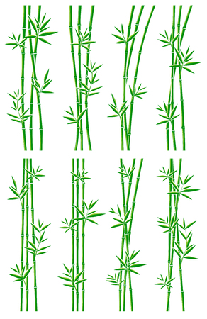 isolated on green: Bamboo collection set. Vector Illustration