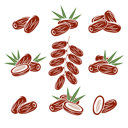 Dates fruit set. Vector Illustration