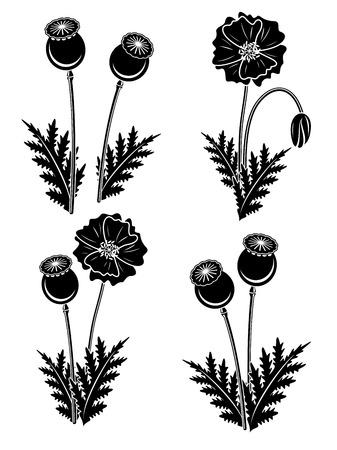 poppy: amapolas rojas fijadas. Vector Vectores