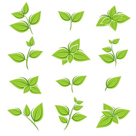 Green tea leaf collectie set. Vector