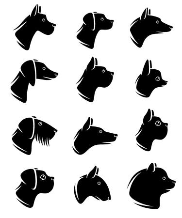 labrador: Dogs set. Vector