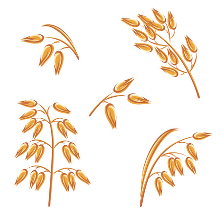 Oats collection vector set.