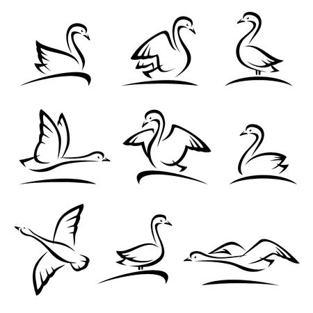 Swan set. Vector
