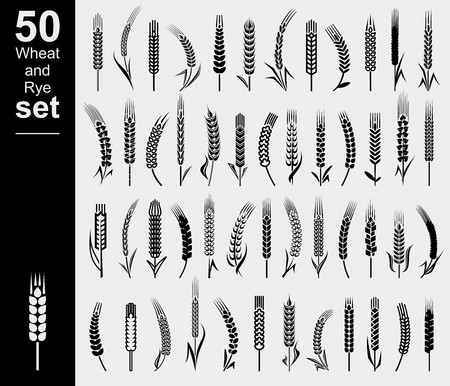 Ears of wheat and rye set. Vector Vetores