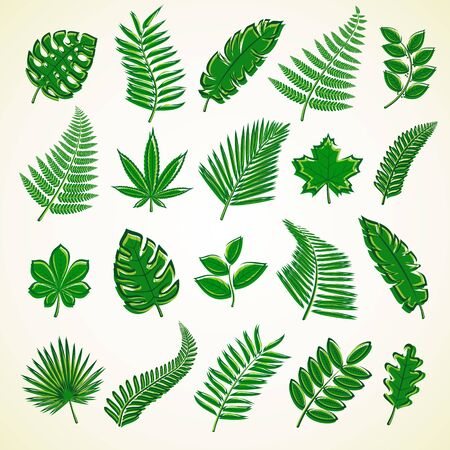 Set of leaves. Collection icon leaves. Vector