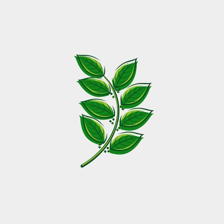 Bay leaf set. Collection icon bay leaves. Vector Zdjęcie Seryjne - 129002781