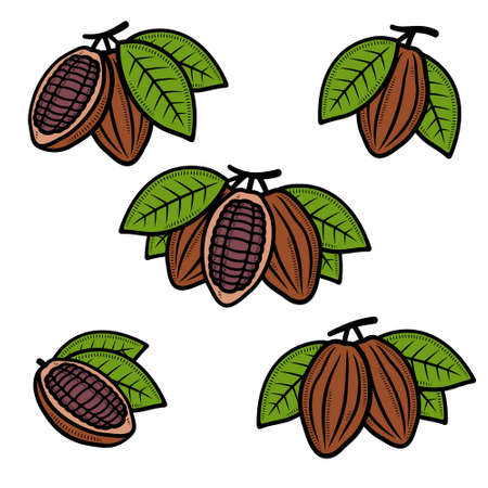 Cacao beans set. Collection cacao beans icons. Vector