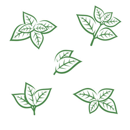 Mint leaves collection set. Collection mint leaves icon. Vector