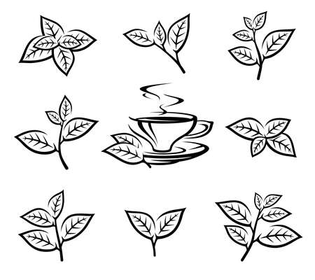 Green tea leaf collection set. Collection green tea leaf icon. Vector