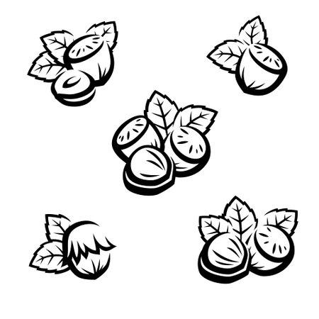 Hazelnut nuts set. Collection icon hazelnut nuts. Vector