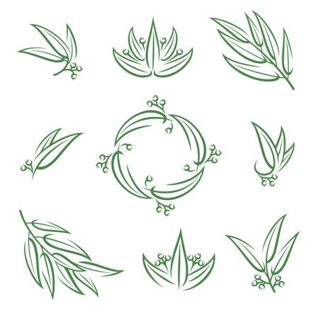 Eucalyptus set. Collection icon eucalyptus. Vector