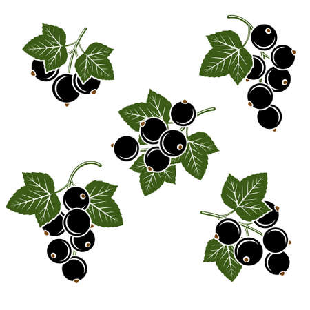 Black currant set. Collection icons black currant. Vector illustration