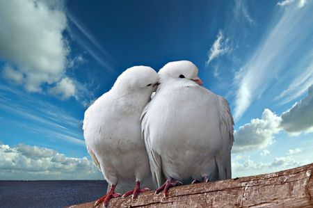sensually: Two beautiful enamoured pigeons on a background of the dark blue sea and the sky. Very beautifully and sensually Stock Photo