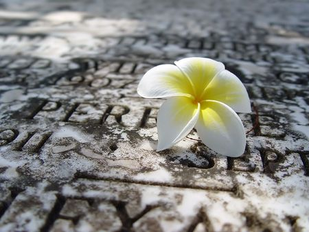 singularity: Beautiful ochroleucous flower on a background of a monument with a snow in solar winter day