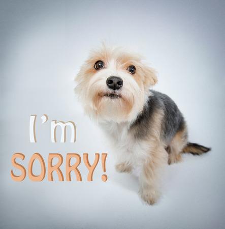 pardon: Im sorry, lovely dog beg pardon and look