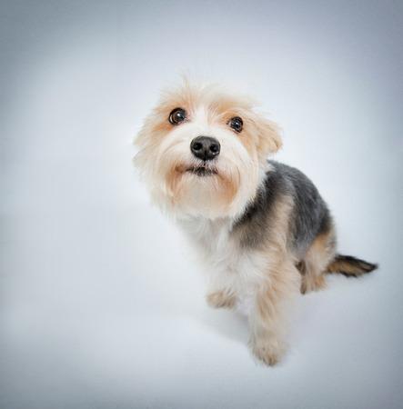 pardon: Im sorry, lovely dog beg pardon top view