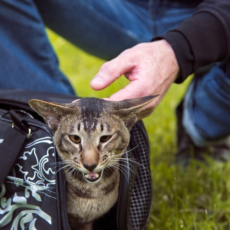 cat carrier: cat comes out of the carrying case in the walk