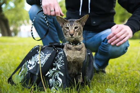 cat comes out of the carrying case in the walk