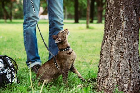 cat wants to climb the tree during the walk