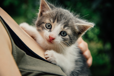 small pretty kitten on the woman chest. Care concept