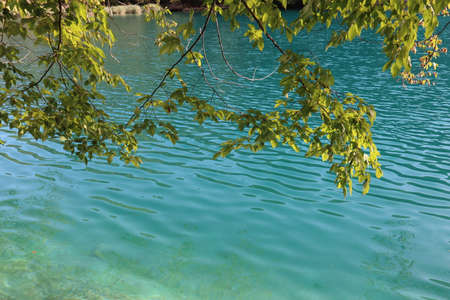 Yellow-green leaves of a tree against the backdrop of turquoise water, Plitvice Lakes National Park