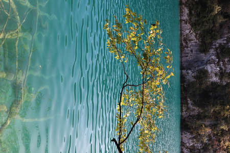 Scenic view of a tree branch with green yellowish leaves on the background of a lake with blue, azure water on a day, Plitvice Lakes National Park