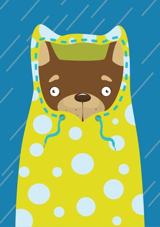 raincoat: Little dog in a raincoat in the rain
