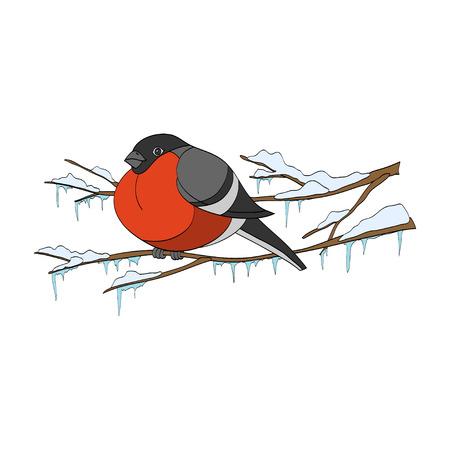 bullfinch: Bullfinch sitting on winter branch. Vector handdrawn illustration Illustration