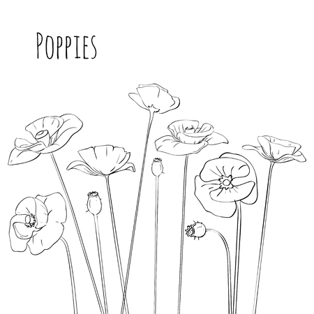 wite: Poppies line-art black and wite isolated on a white background. Vector illusttration