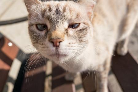 Portret van een kat die naar het frame kijkt