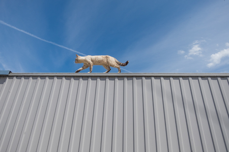 A cat walks along a metal fence against a sky with clouds